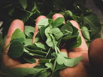 Leaves in the hand . Go green ! Save Environment , Save our Mother Earth royalty free stock images