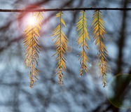 Leaves hanging from a branch Stock Images