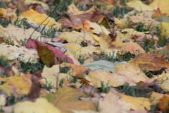 Leaves. That has fallen to the ground Stock Photo