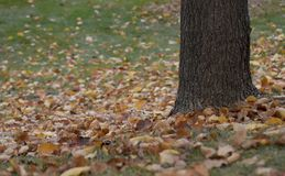 Autumn leave fallen under a tree on the grass Royalty Free Stock Images