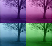 Leaves of hearts. Four different colors of a tree with floating hearts Royalty Free Stock Photos