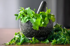 Leaves of herbs in a granite mortar with pestle Royalty Free Stock Photo
