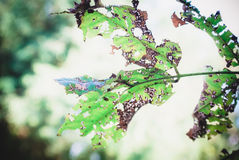 Leaves a hole Royalty Free Stock Photography