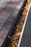 Leaves in House Gutter - Vertical View. Time to clean out the leaves out of the gutters on your house or home royalty free stock images
