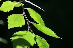 Leaves i fjäder Arkivbild