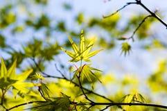 Leaves i fjäder Arkivfoton