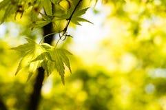 Leaves i fjäder Royaltyfria Foton