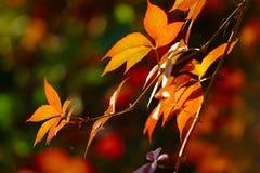 Leaves i höstfärger arkivbild