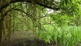 Leaves i skog arkivfilmer