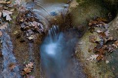 Leaves i strömmen Royaltyfri Fotografi