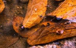 Leaves i vatten Royaltyfri Foto