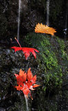Leaves i vattenfall Royaltyfri Fotografi