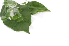 Leaves and ice Royalty Free Stock Image