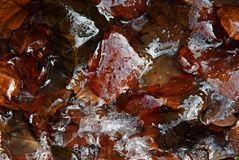 Leaves in ice stock image