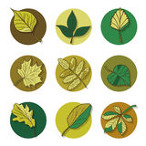 Leaves icon. green leaf of forest tree. Royalty Free Stock Image