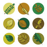 Leaves icon. green leaf of forest tree. Stock Photo