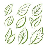 Leaves icon hand drawn  set isolated on white background. Shapes of green leaves of trees and plants. Elements for eco and bio logos Royalty Free Stock Photography