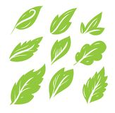 Leaves icon hand drawn vector set isolated on white background. Shapes of green leaves of trees and plants. Elements for eco and bio logos Royalty Free Stock Photo
