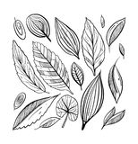 Leaves icon hand drawn vector set isolated on white background. Shapes of green leaves of trees and plants. Elements for eco and bio logos Stock Photo