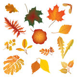Leaves icon  set. Autumn nature decor. Royalty Free Stock Photos