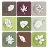 Leaves icon.  Are used as buttons for web design Stock Photos