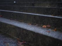 Leaves on icy stairway Stock Image