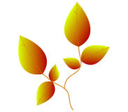 Leaves illustrated Royalty Free Stock Photos