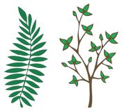 Leaves illustration. Illustrations of two different leaf types Royalty Free Stock Photography