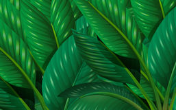 Leaves. Illustration of the green leaves Stock Image