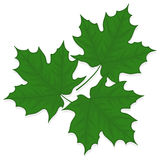 Leaves illustration. Green leaves illustration on white background Royalty Free Stock Photos