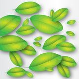 Leaves. This illustration represents some green leaves as background Royalty Free Stock Image