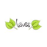 Leaves illustration Royalty Free Stock Image