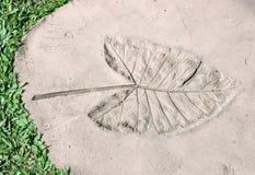 Leaves Imprint Stock Photo