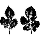 Leaves imprint, sheet printing Stock Images