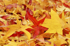 Free Leaves In Autumn Stock Photos - 7190573