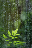 Leaves In Rain Royalty Free Stock Photo