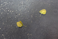 Free Leaves In Raining Royalty Free Stock Photo - 43598725