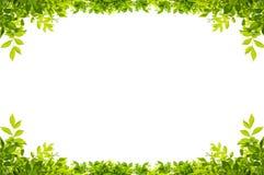 Leaves inramar isolerat royaltyfria bilder