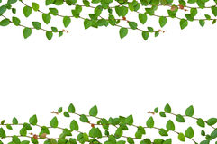 Leaves inramar isolerat Arkivfoton