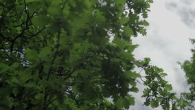 Leaves isolated on the blue sky and clouds stock video footage