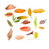 Leaves Isolated On White Stock Images