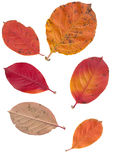 Leaves isolated on white background Stock Photography