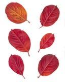 Leaves isolated on white background Royalty Free Stock Image
