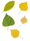 Leaves isolated on white background Stock Images