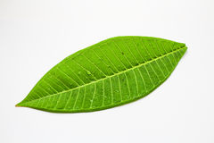 Leaves. An isolated leaves on white background Stock Photo