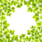 Leaves isolerade Royaltyfria Bilder