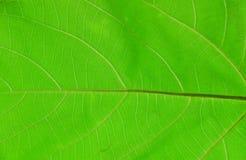 Leaves isolerade på vitbakgrund royaltyfri fotografi