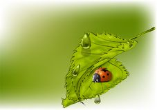 Leaves and ladybug Royalty Free Stock Images