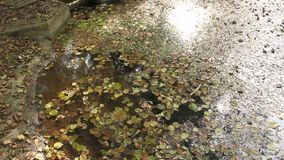 Leaves on the lake stock video footage