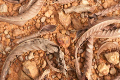Leaves  on laterite. Closeup of stones texture Stock Photos